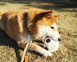 全ては犬の幸せのために